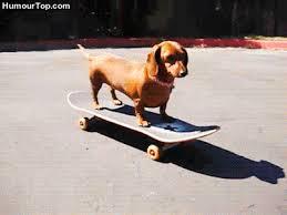 """Résultat de recherche d'images pour """"gifs animés gratuits humour chien équilibriste"""""""