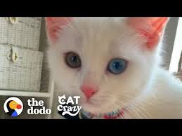 <b>Life</b> With A <b>Cat</b> | The Dodo <b>Cat</b> Crazy - YouTube