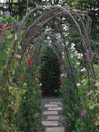garden trellis pea trellis