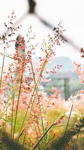 flower wallpaper nature pics
