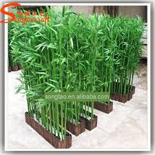 Small Picture Garden Design Garden Design with How To Grow A Bamboo Privacy