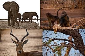 Национальные парки Африки флора и фауна в африканских заповедниках