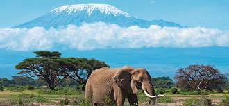 Image result for the beauty of africa