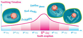 Teething Timeline Camilia Teething Medicine