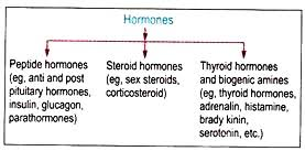 essay on hormones characteristics and mechanism essay 3 classification of hormones