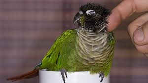 5 Reasons Conures Make Great Family Pets