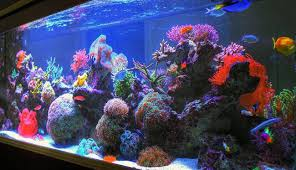 fish tank lighting ideas. Adorable Fish Tank Decoration Ideas Lighting H