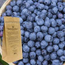 blueberry soil mix. Wonderful Mix Blueberries Alive In Blueberry Soil Mix X