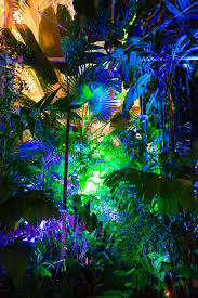 Holiday Lights At Sf Conservatory Sf Night Bloom No Proscenium The Guide To Everything