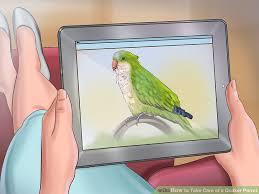 image led take care of a quaker parrot step 3