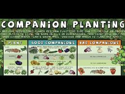 What Is Companion Planting Food Forest Examples