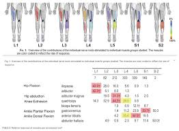 Orthopedic Assessment Chart Lower Extremity Spine Neuro Exam Spine Orthobullets