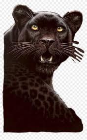 pantera sticker black cheetah hd png
