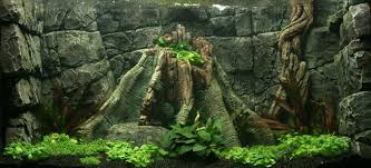 Aquarium Backgrounds Hd Aquarium Backgrounds Tirevi Fontanacountryinn Com