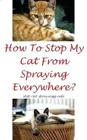 how to get cat urine out of couch cat out of clothes anti cat how to get cat urine out