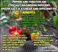 epsom salt gardening. Epsom-salt-uses Epsom Salt Gardening