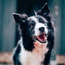<b>Canine</b> HealthCheck
