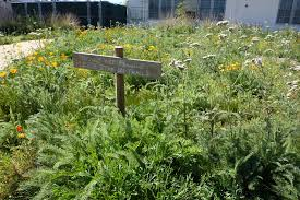 they will not only have their flowering native plant garden on display but will be culling
