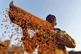what creates food crises bri