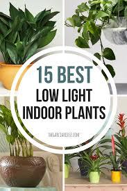Houseplants For Low Light Areas 15 Best Low Light Indoor Plants Bathroom Plants Indoor