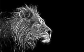 lion wallpaper black and white wallpaper photo