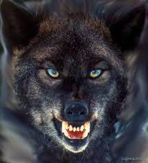 queres tentar?   Wolf spirit animal, Wolf spirit, Black wolf