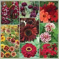 garden seed. Summer Love: Chocolate And Garnet Bouquet Garden Seed Collection
