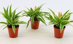 indoor plants that are safe for dogs