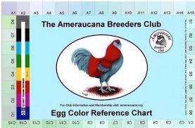 Ameraucana Chicken Color Chart Ameraucana Egg Color Reference Chart Chicken Egg Colors