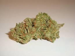Bob Marley Dream Catcher Dreamcatcher Regular Marijuana Strain 81