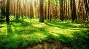 Beautiful forest trees sunshine wallpapers golf nature wallpaper green  forests grass light
