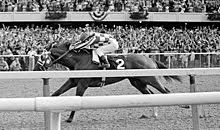 2013 Belmont Stakes Results Chart 1973 Belmont Stakes Wikipedia