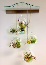 terrarium hanging glass bubble air plant containers for indoor garden living room decoration ideas