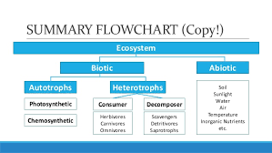 Components Of Ecosystem Flow Chart Unit 5 Lesson 5 2 Biotic And Abiotic Components