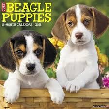 beagle 2018 calendars
