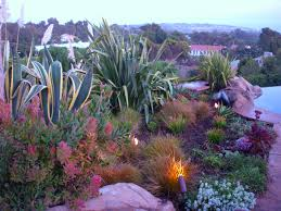 Small Picture drought tolerant plants A Gardeners Thoughts Fancies