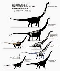 Size Comparison Of Dreadnoughtus With Other