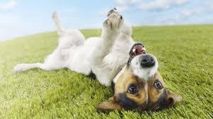Risultati immagini per cane che gioca
