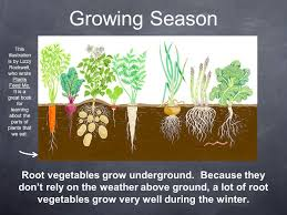 above ground vegetable garden. Planting A Vegetable Garden Above Ground Post O