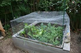 how to keep groundhogs out of my garden. My Son Responded With Own Words: There Is No Giving Up In Gardening. I Told Husband That He Had To Do Something. . How Protect The Vegetable Garden Keep Groundhogs Out Of