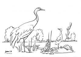Kleurplaat Kraanvogel Webwinkel Ark