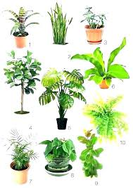 Best indoor plants for office Air Purifying Low Light Plants For Office Very Low Light Plants Office Plants Low Light Best Indoor Plants Neginegolestan Low Light Plants For Office Zwaluwhoeveinfo