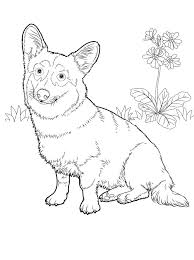 Small Picture 66 best Color Cats Dogs images on Pinterest Coloring books