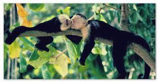 Доклады о животных тропических лесов джунглей  Доклад о животных тропических лесов