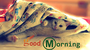 0 good morning wallpapers free good morning wishes with cat pictures images