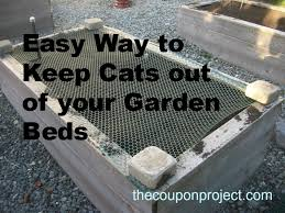 how to keep cats out of the garden. How To Keep Cats Out Of The Garden E