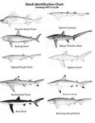 Shark Sort Game