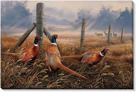 meadow mist pheasant birds wrapped canvas giclee print wall art