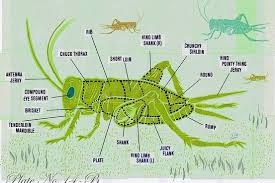 The Benefits Of Eating Insects Wsj