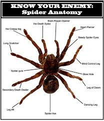 Spider Anatomy Chart Spider Anatomy Explained The Mary Sue